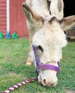 Zippy the Donkey