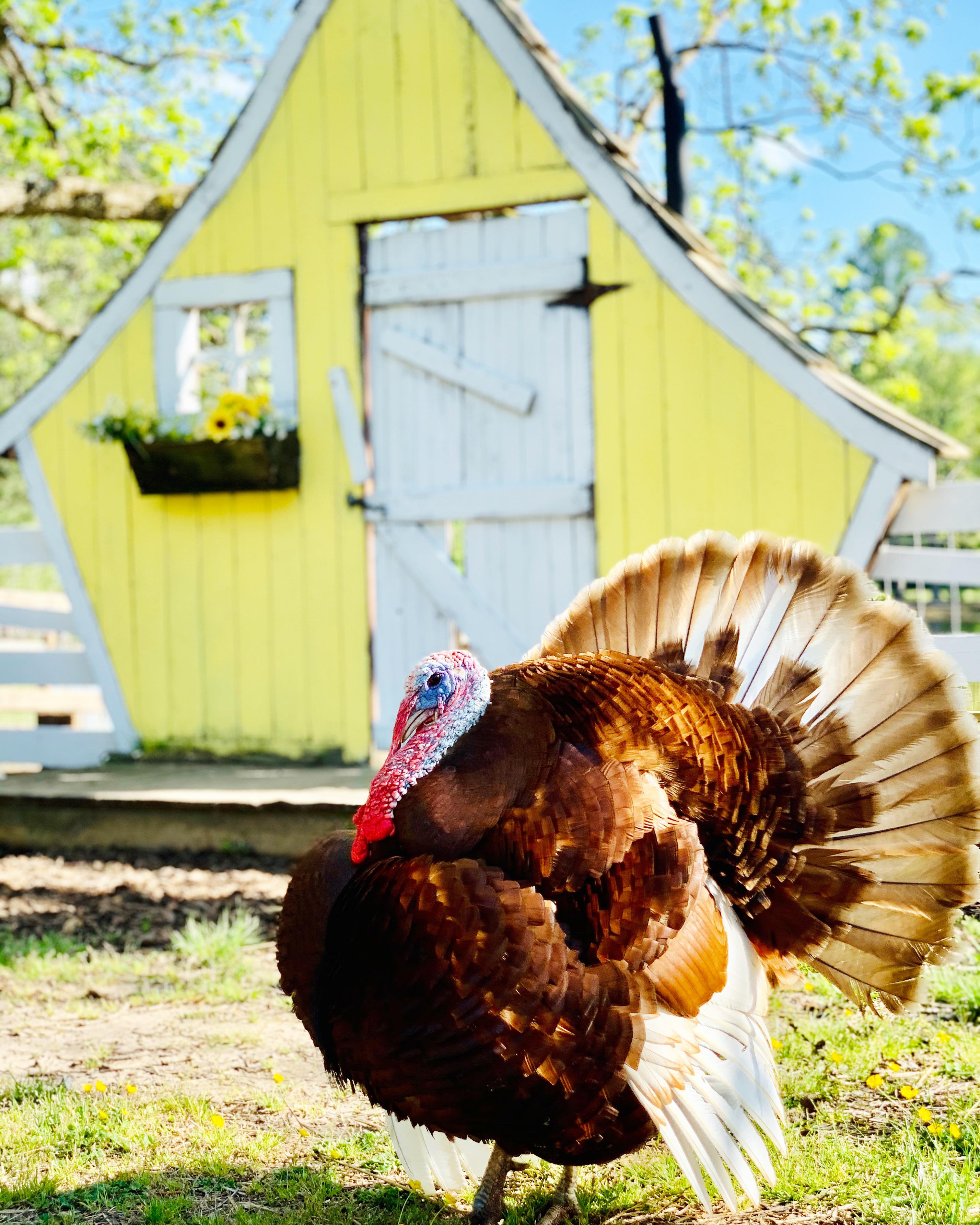 Stuffin' The Turkey