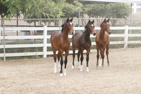 foals_1848.JPG