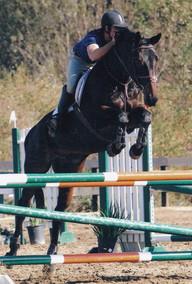 Horse Show 2_edited.jpg