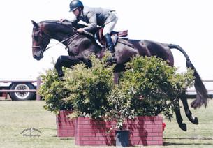 Performance Horses 7.jpg