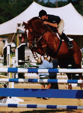 Stallion Show Jumping