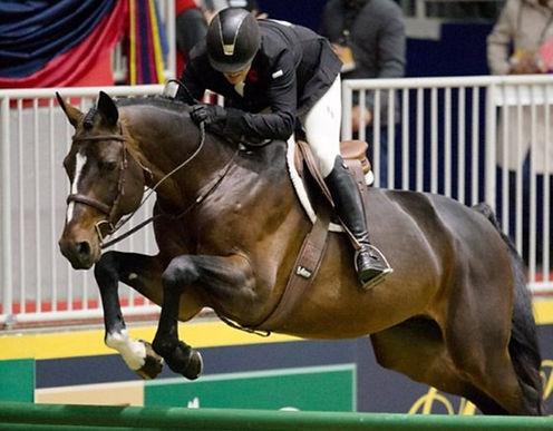 Diamo Blue Stallion