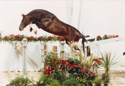 Corlando jumping