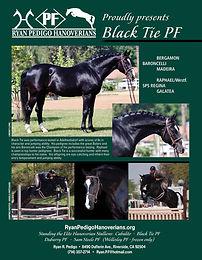 black tie stallion flyer 5 10-1.jpg