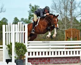 PF's Apiro Hunter Stallion