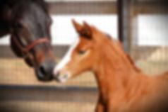 Foal&Mare_1.jpg