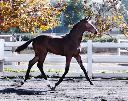 Foals 2.jpg