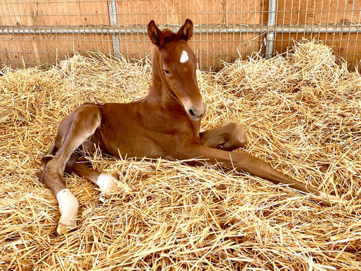 We Welcome FIVE New Foals To The PF Family!