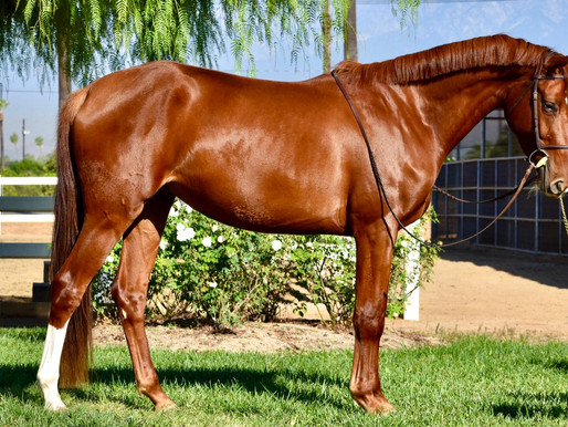 Welcome To Our New Broodmare Imports