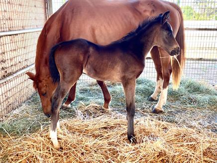 2020 Foal