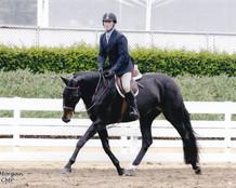 Horse Shows 4.jpg