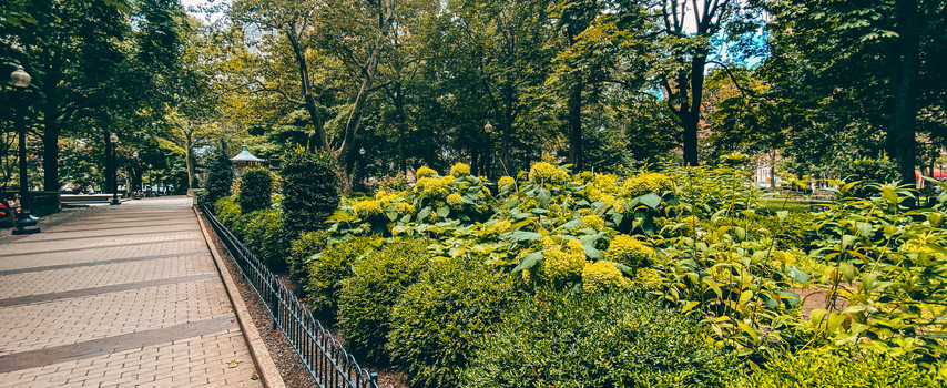 Philadelphia Park Greenery
