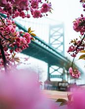 Philadelphia Ben Franklin Bridge Spring