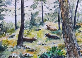 פרות ביער.jpg