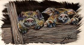 pigs (1).jpg