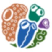 ascidias_color-1-600x600.png