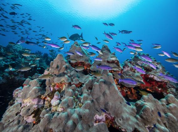 oceana-expedicion-proyecto-alacranes-3.png