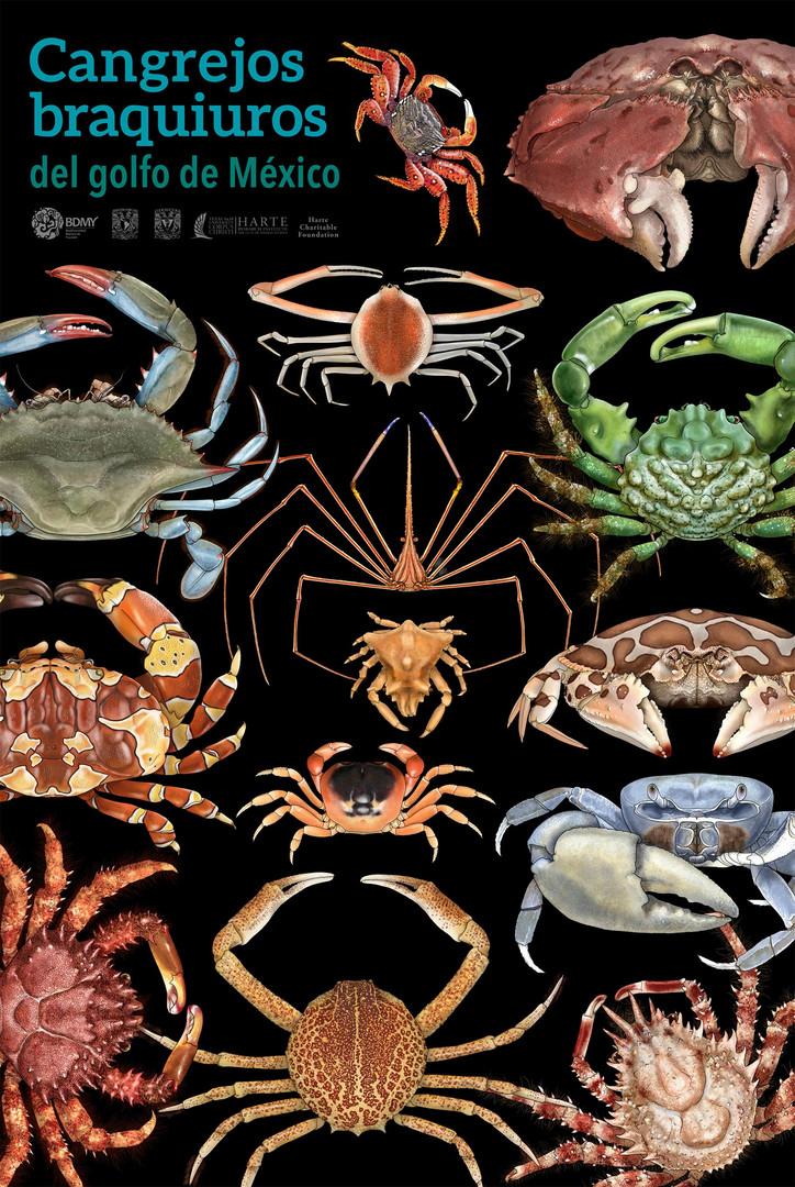 Cangrejos braquiuros del Golfo de México