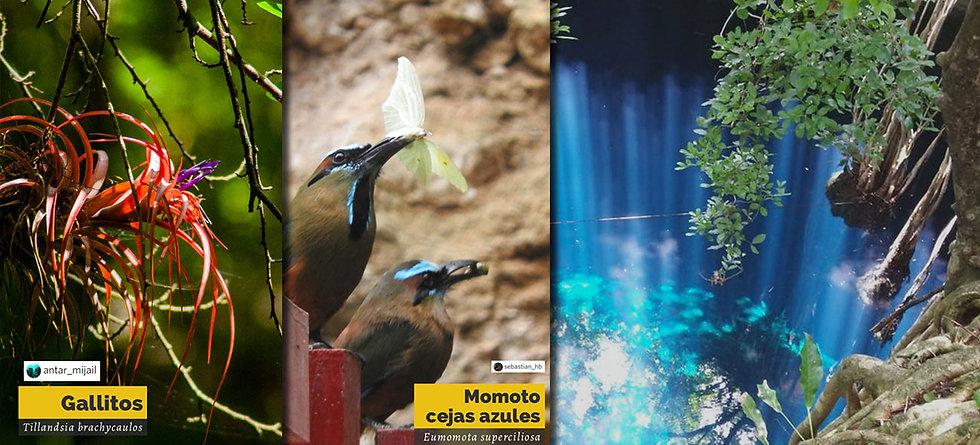 Cover-Biodiversidad-de-cenotes.jpg