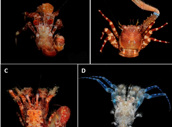 crustaceospng