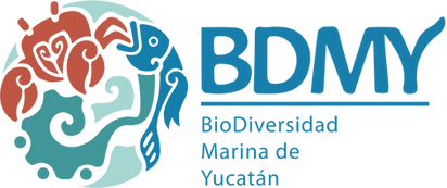 Logo-BDMY+Tipo.png