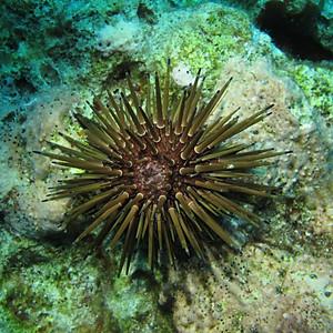 Arrecife Cayo Arenas