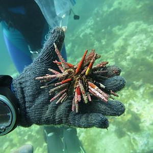 Arrecife Serpientes-Sisal