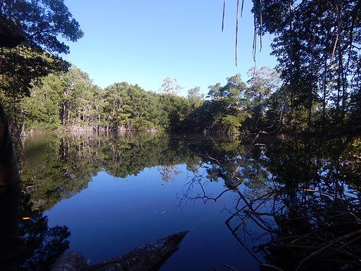 Hacía un mapa de biodiversidad acuática de cenotes de la península de Yucatán
