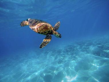 Coral-reef-04.jpg