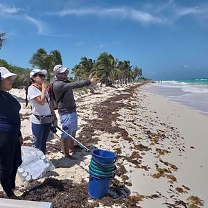 Playas Arenosas: Q. Roo