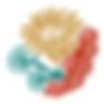 cnidarios_Color-1-150x150.png