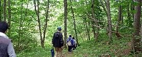 1/f のCSR。(財)C.W.ニコル・アファンの森財団への協力