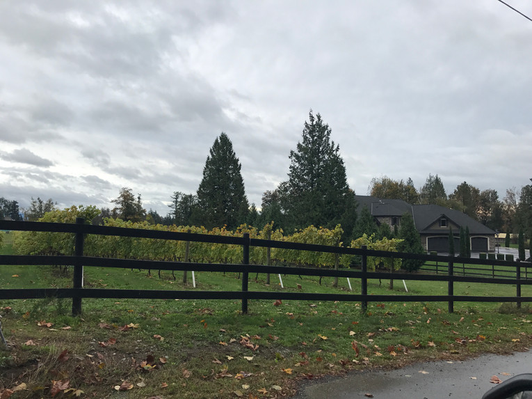 Winery Trail-2.jpg