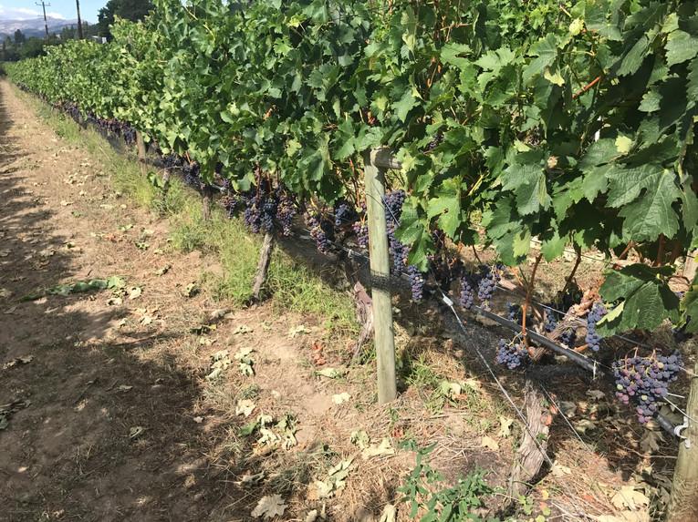 Winery Trail-1 (1).jpg