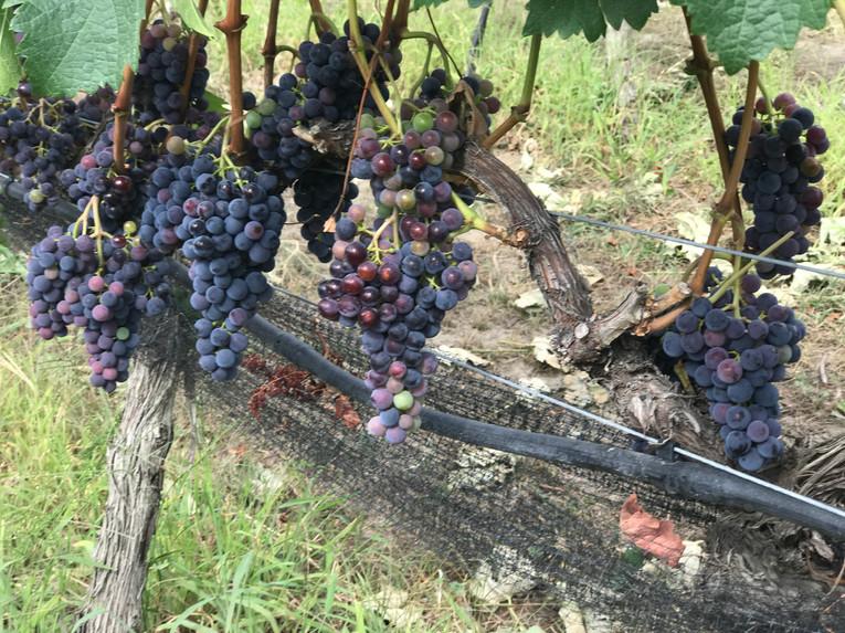Winery Trail-2 (1).jpg