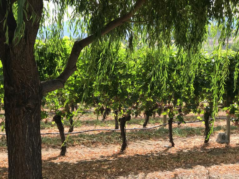 Winery Trail-3 (1).jpg
