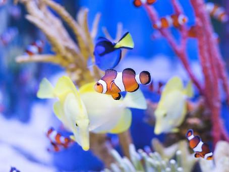 海運と生物多様性保護の話