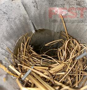 Birds Nest Inside Exhaust Vent.png