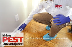 Insect Control Midway Pest Management.jp
