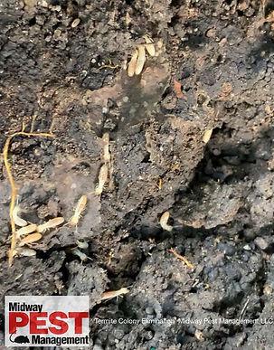 Eastern Subterranean Termites Midway Pes