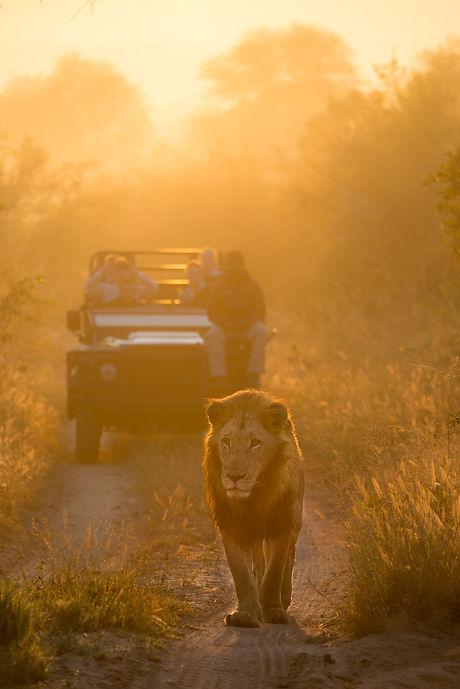Lion Sands_Safari_4_Game Drive-3.jpg