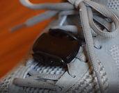 sensor on shoe.JPG