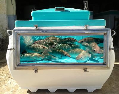 Caixa para Transporte de Peixe Vivo com Visor.