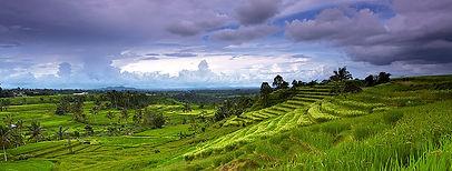 jatiluwih+rice+field.jpg