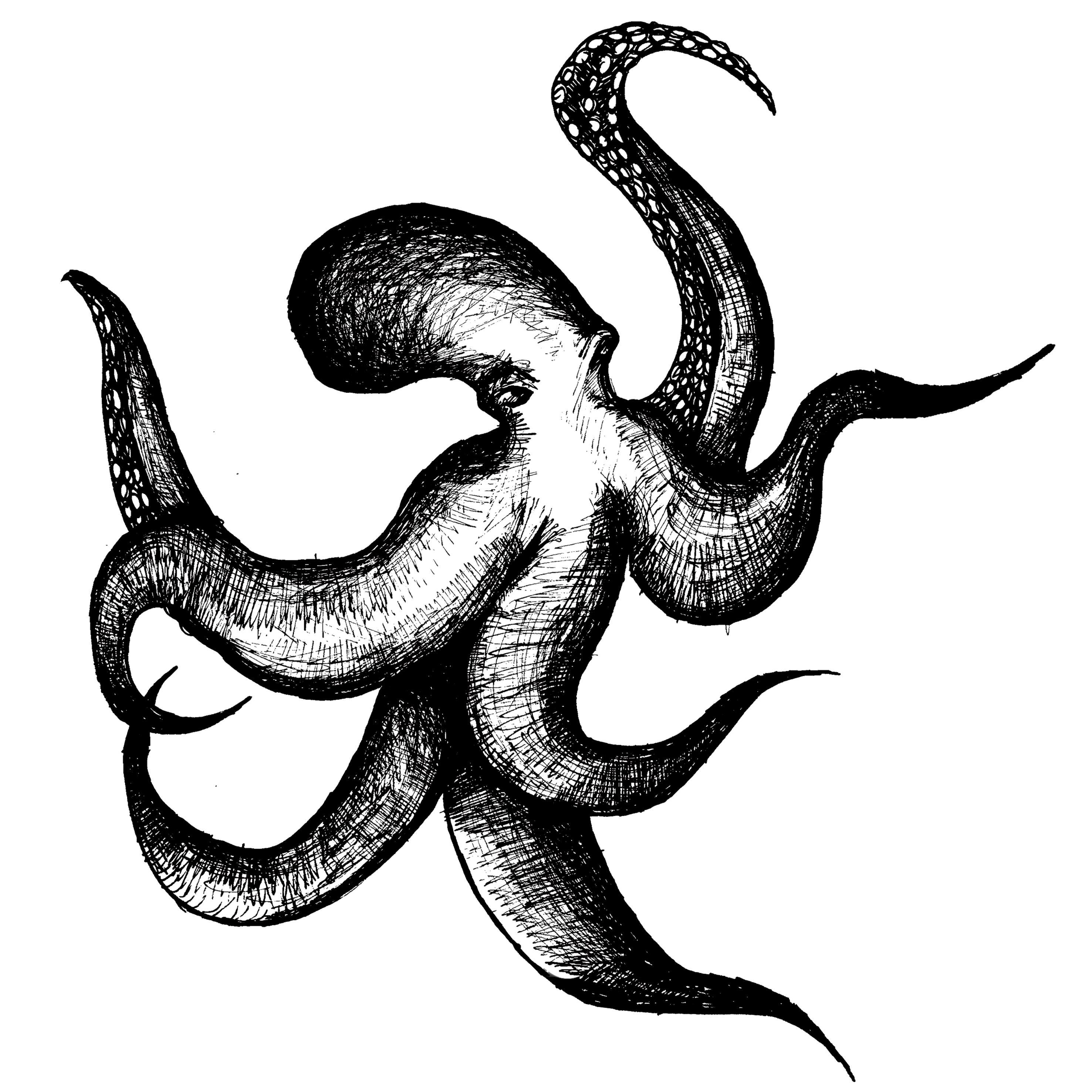 Heptopus