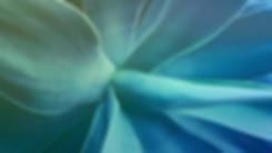 esencial_background_Mesa de trabajo 1.pn