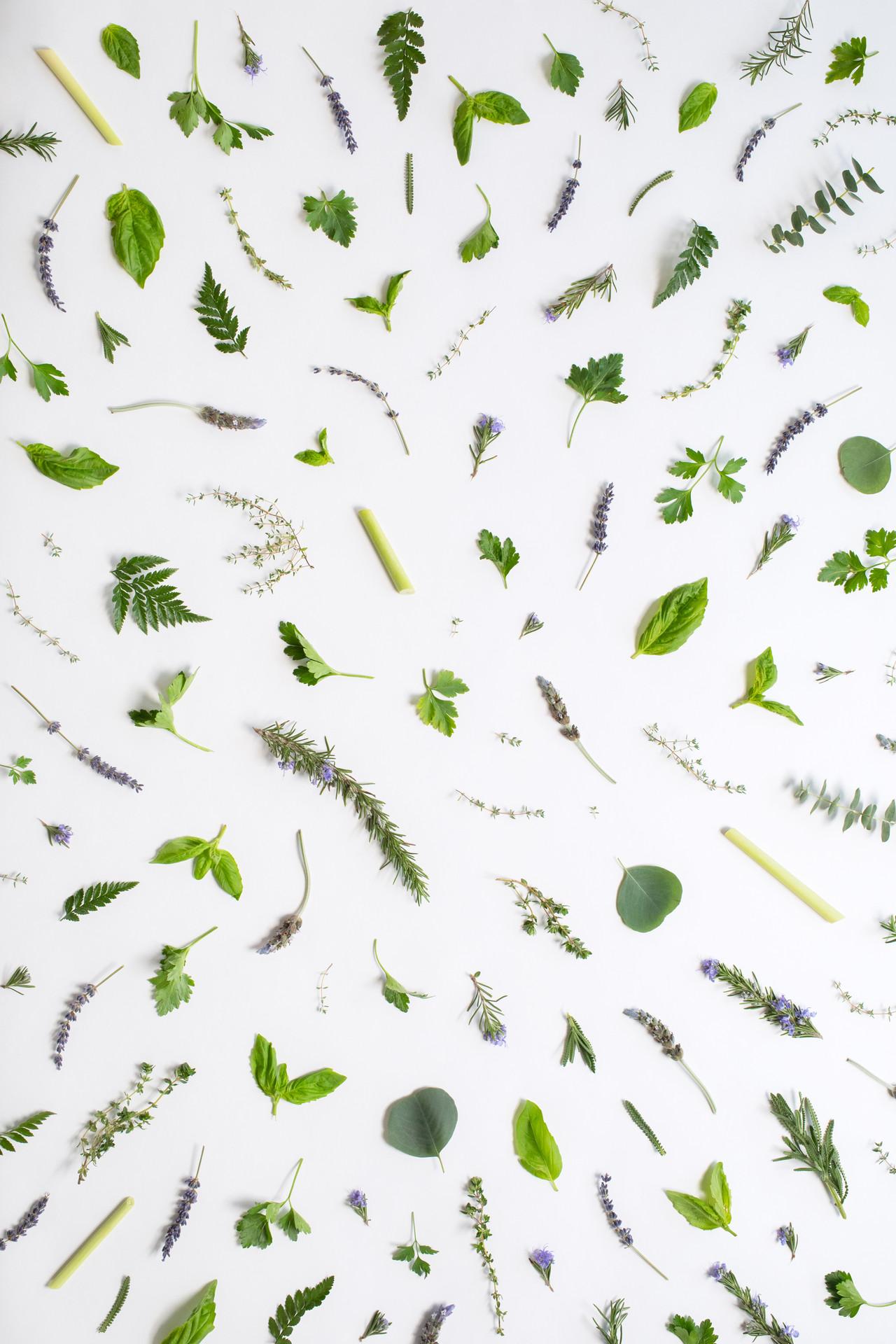 Herb Garden–Spring 2020