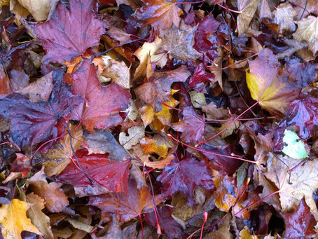 Free And Easy - making leaf mould