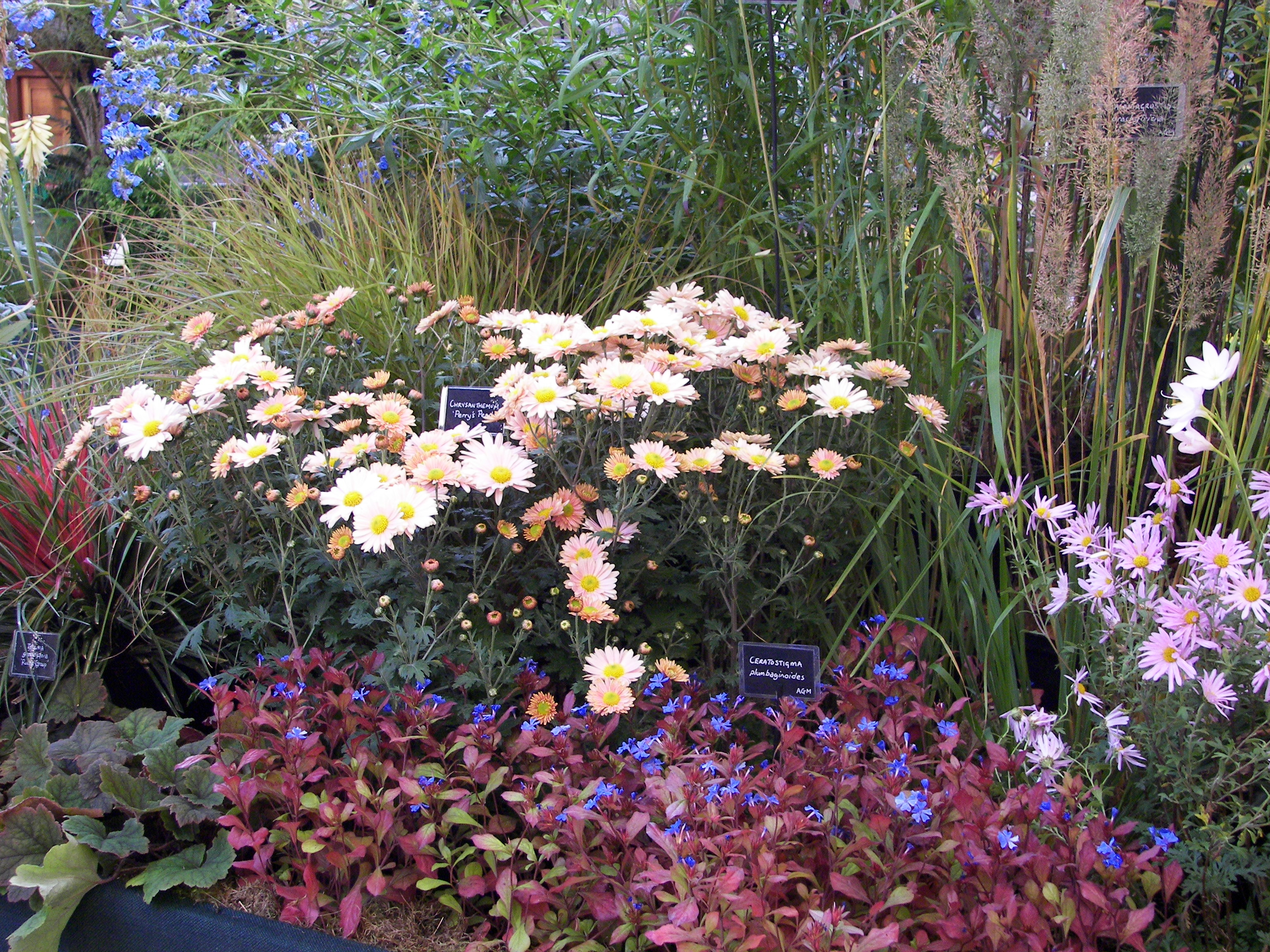 RHS Great Autumn Show, Westminster